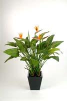 NATURAL STRELITZIA W/POT - Länge: 130cm, Blätter: 43, Blüten: 5