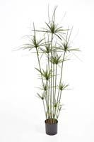 PAPYRUS TREE DE LUXE W/P - Länge: 140 cm, Blätter: 213