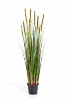 FOXTAIL GRASS W/GREEN FL - Blätter : 513, Blüten : 9