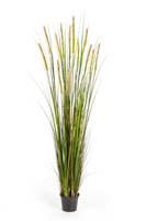 FOXTAIL GRASS W/GREEN FL, Blätter : 619, Blüten : 13