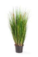 FOXTAIL GRASS W/GREEN FL, Blätter: 1845, Blüten: 3