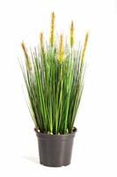 FOXTAIL GRASS W/GREEN FL, Blätter: 791