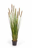 FOXTAIL GRASS W/BROWN FL, Blätter : 513, Blüten : 9