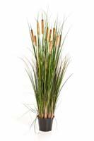 CATTAIL GRASS W/BROWN FL, Blätter: 551, Blüten: 10