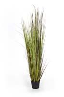 BAMBOO GRASS X 13, Blätter: 817, Blüten: 13