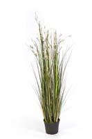 CORAL GRASS W/CREAM FLOWERS, Blätter: 699, Blüten: 12