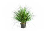 ONION GRASS X 1624-50CM, Bltter: 1624