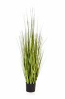 VARIEGATED CAREX GRASS - Länge : 120cm, Blätter : 285