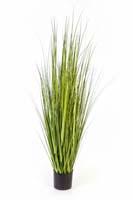 VARIEGATED CAREX GRASS - Länge : 150cm, Blätter : 436