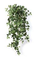 ENGLISH IVY HANGING BUSH X 462 - Länge: 90cm, Blätter: 462