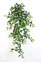 TRADESCANTIA HANGING BUSH X 15 - Länge: 105cm, Blätter: 462