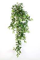 TRADESCANTIA HANGING BUSH X 18 - Länge: 125cm, Blätter: 730