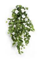 GERANIUM HANGING BUSH X 12 - Länge: 90cm, Blätter: 269, Blüten: 23