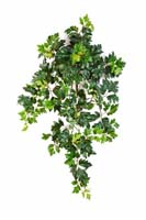 GRAPE IVY HANGING BUSH X 7 - Länge: 70cm, Blätter: 351