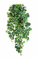 GRAPE IVY HANGING BUSH X 12 - Länge: 90cm, Blätter: 699