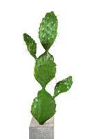 Kakteen - Kunststoffpflanzen -Kunstpflanzen