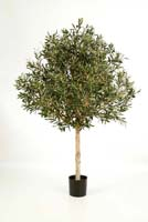 NATURAL OLIVE TOPIARY TREE, Blätter: 4784, Früchte: 96