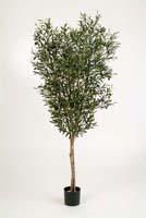 NATURAL OLIVE TREE W/F - Länge: 180cm, Blätter: 3640
