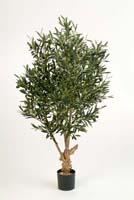 TWISTED OLIVE TREE W/F, Blätter: 2288, Früchte: 66