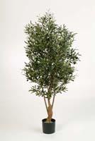 TWISTED OLIVE TREE W/F, Blätter: 3432, Früchte: 96