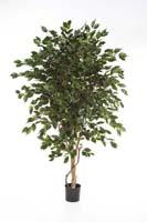 FICUS DELUXE EXOTICA TREE - Länge: 150cm, Blätter: 1705