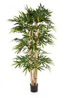 NEW GIANT BAMBOO - Länge: 150cm, Blätter: 768