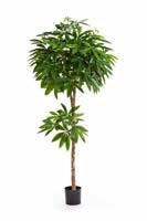 PACHIRA TREE - Länge: 150cm, Blätter: 469