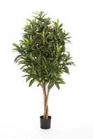 CROTON GOLDFINGER TREE - Länge: 105cm, Blätter: 1092