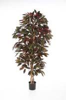 CAPENSIA BUSH TREE - Länge: 150cm, Blätter: 816