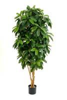LADY SCHEFFLERA TREE - Länge: 142cm, Blätter: 500