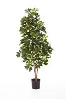 NATURAL SCHEFFLERA - Länge: 80cm, Blätter: 470