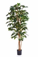 FLOWERING COFFEE TREE - Länge: 120cm, Blätter: 329