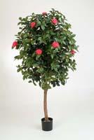 CAMELIA VINE TREE - Länge: 170cm, Blätter: 1668, Blüten: 186