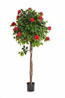 NEW CAMELIA UMBRELLA TREE, Blätter: 885, Blüten: 106
