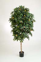 MANDARIN ORANGE TREE - Länge: 110cm, Blätter: 1028, Blüten: 12