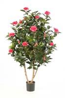 CAMELIA JAPONICA BUSH TREE, Blätter: 1008, Blüten: 32