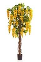 WISTERIA LIANA - Länge: 180cm, Blätter: 972, Blüten: 36