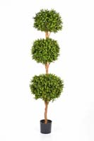 BOXWOOD TRIPLE BALL TREE - Länge: 190cm, Blätter: 3672