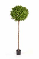 BOXWOOD BALL TREE - Länge: 170cm, Blätter: 2088