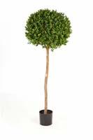 BUXUS BALL TREE - Länge: 110cm, Blätter: 6912