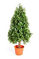 BUXUS PYRAMIDE TREE - Länge: 60cm, Blätter: 3584