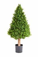 BUXUS PYRAMIDE TREE - Länge: 100cm, Blätter: 10752