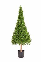 BUXUS CONE TOWER TREE - Länge: 120cm, Blätter: 9472