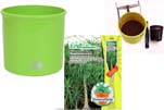 """Plants4Kids """"Mein Pflanzentöpfchen"""" Topf apfelgrün Komplettset mit Beaucarnea Nr. 50403"""