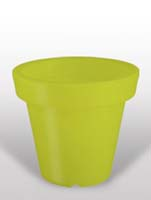 Bloom - Lime ø60/H:60