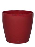 Lechuza - Classico (scarlet rot) - ø35, h:32